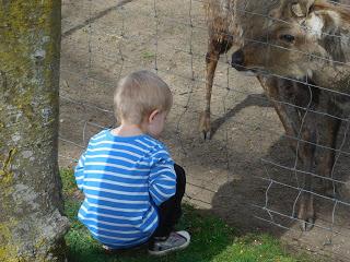 Tiere füttern