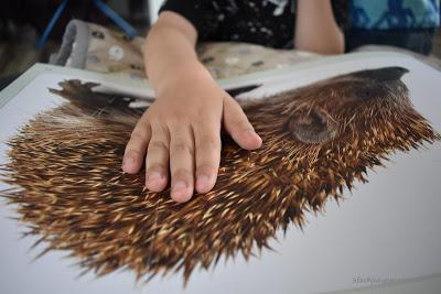 kinderbuch mit tieren
