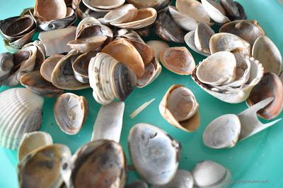 verschiedene Muscheln