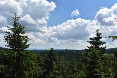 Ausblick vom Baumkronenweg